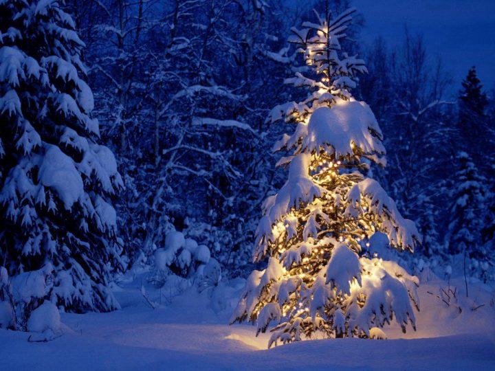 Joyeux Noël ! Pull de Noël !